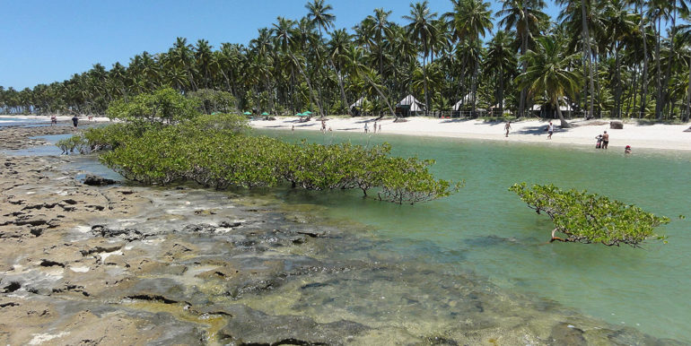 Praia-dos-Carneiros-Tamandare-Pernambuco-por-engesoft